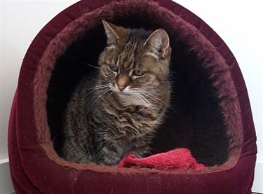 Leave a gift to Cats Protection and benefit from a tax break