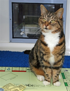 MONOPOLY cat is now on the prowl!