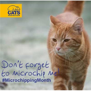 New research finds nearly half the UK's cats are not microchipped