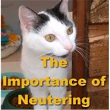 Don't breed problems for later - neuter now!