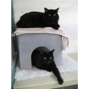 cats protection news feline fort thank you. Black Bedroom Furniture Sets. Home Design Ideas