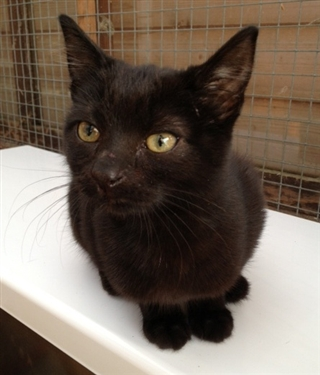 Urgent Homes Needed for Long Stay Cats