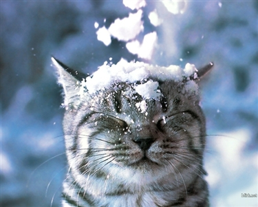 Keeping Your Cats Safe Over Winter