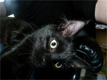 Help Black Cats Improve Their Luck