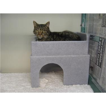 Feline Fortress Hide