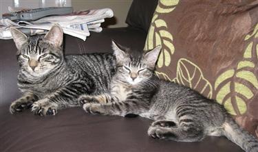 Vinnie and Alfie