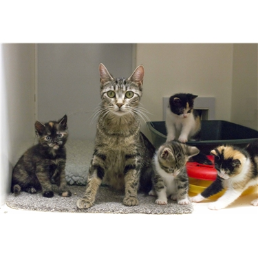 Meet our new sponsor cat Autumn and her cheeky kittens!