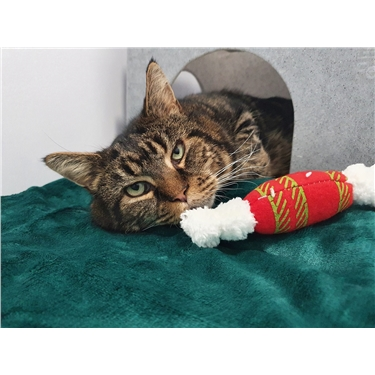 Surrey cats benefit from teenage boys Christmas wish