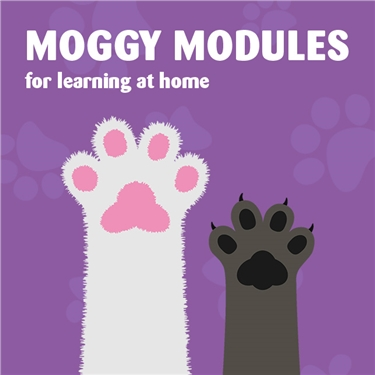 MOGGY MODULES