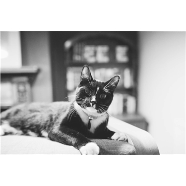 Monochrome moggy Joffrey is the king of National Black Cat Day