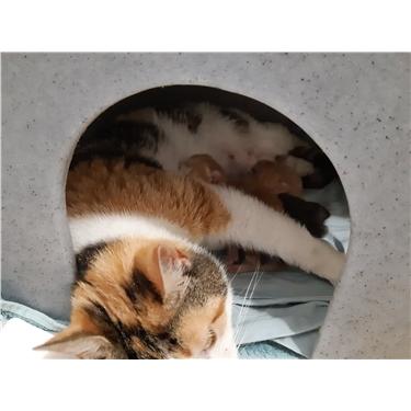 HELP! kitten food appeal