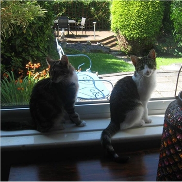 Millie & Lola