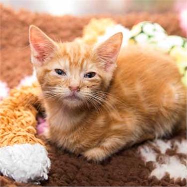 Successful appeal for Bridgend kittens