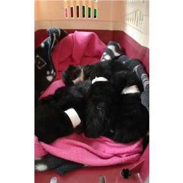 6 tiny kittens abandoned in a lane
