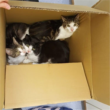 Three cats dumped in cardboard box looking for new homes