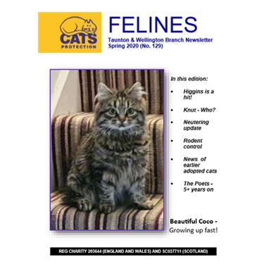 Felines Newsletter Spring 2020