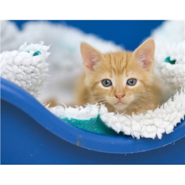 Online buying of cats and kittens