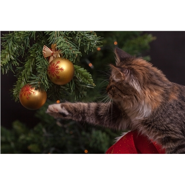 Ely & District Cats Protection Branch - Christmas and Cats