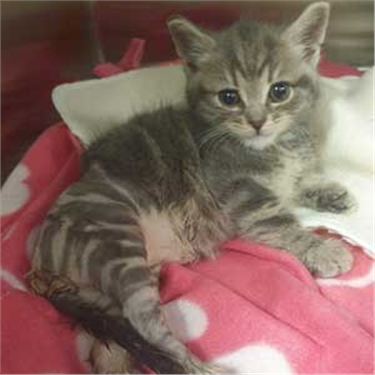 Cat charity raises concerns at spate of kittens dumped on roadside