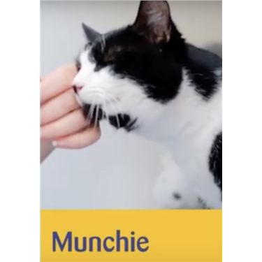 Meet Munchie