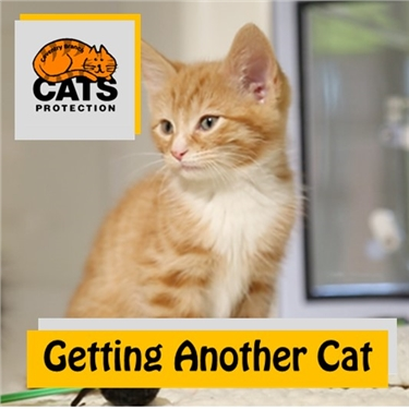 Cat Care: Getting Another Cat