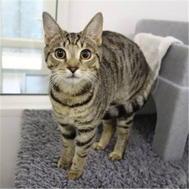 Are you a match for this man-loving moggy?
