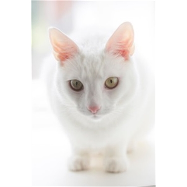 SPECIAL APPEAL:  Can you help us find a safe and special home for Beautiful Blanca?