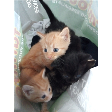 Kittens found inside tied plastic bag, in busy residential area