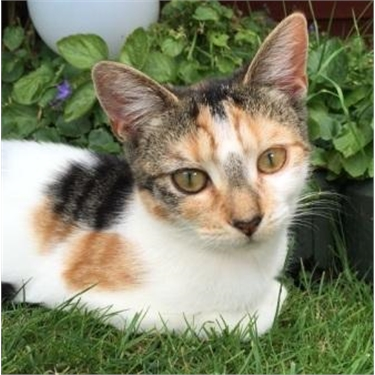 Become a cat sponsor to support local cats