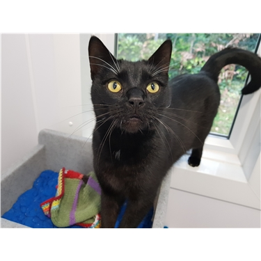 RESERVED! Arthur - Kitty of the Week!