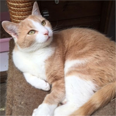 Kiss a Ginger Day: could you give gorgeous ginger cat Sebastion a home?