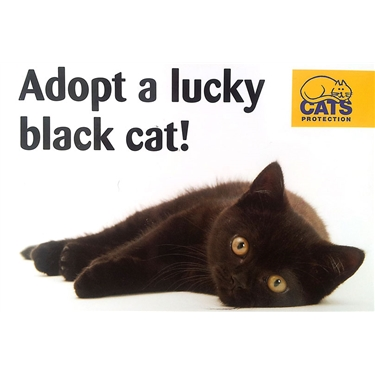 Black Cat Day 2016
