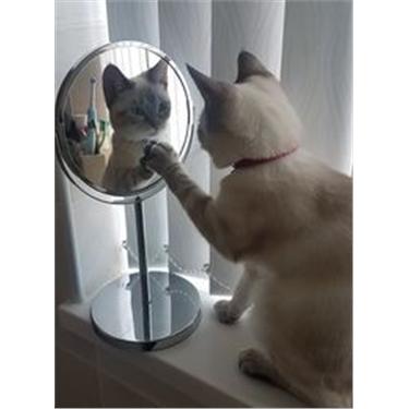 VIRTUAL PET CAT SHOW