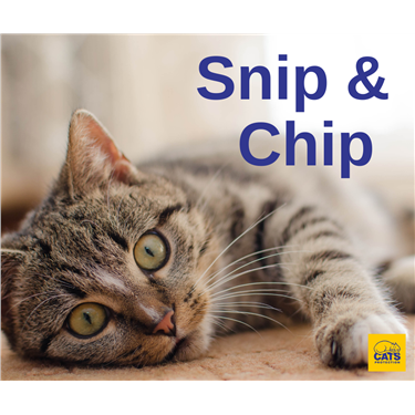 Snip & Chip is back for Summer 2021