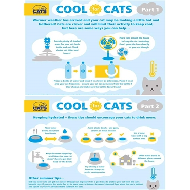 Cool for Cats - how to keep your cats cool in the current hot weather!