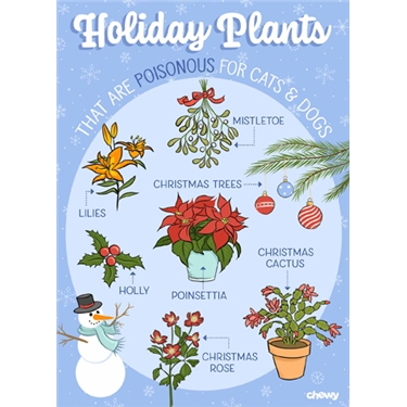 Festive plants toxic to cats & dogs