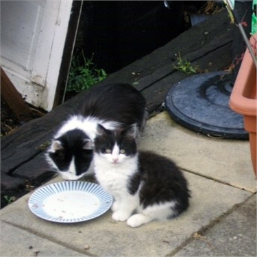 Feral Cats in Need of Loving Homes