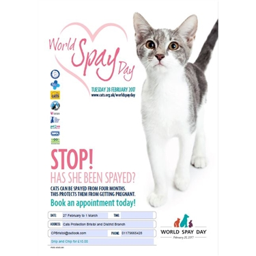 Cats Protection supports World Spay Day!