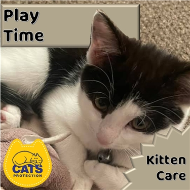 Kitten Care: Play Time