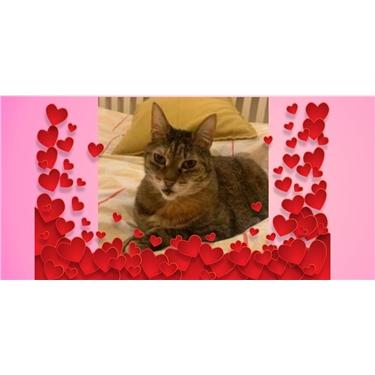 REHOMED. Make Valentine dreams come true for Evie