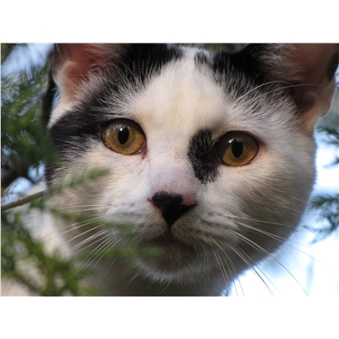 Advice on Keeping your cat safe