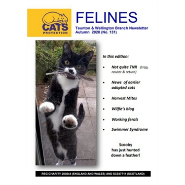 Felines Newsletter Autumn 2020
