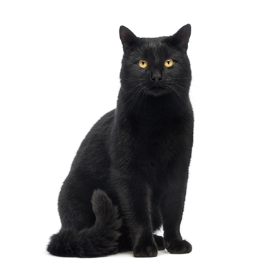 Cat charity uncovers a spooky contradiction in attitudes to black cats