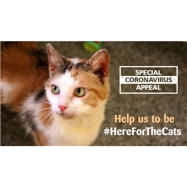 Mitcham Homing Centre is #HereForTheCats