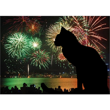 Cats & Fireworks