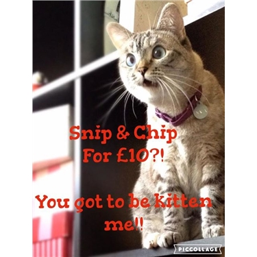 LAST DAY for £10 snip & chip
