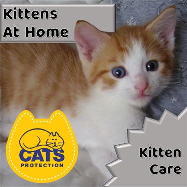 Kitten Care: Bringing Your Kitten Home