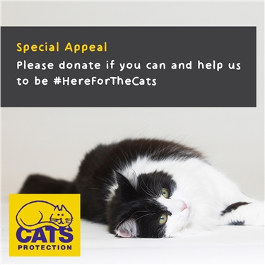 Help Us Be Here For The Cats During Coronavirus