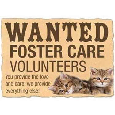 Could you be a Cats Protection Cat Fosterer and make a difference to cats