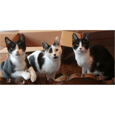 Feline trio looking for a new home this Siblings Day